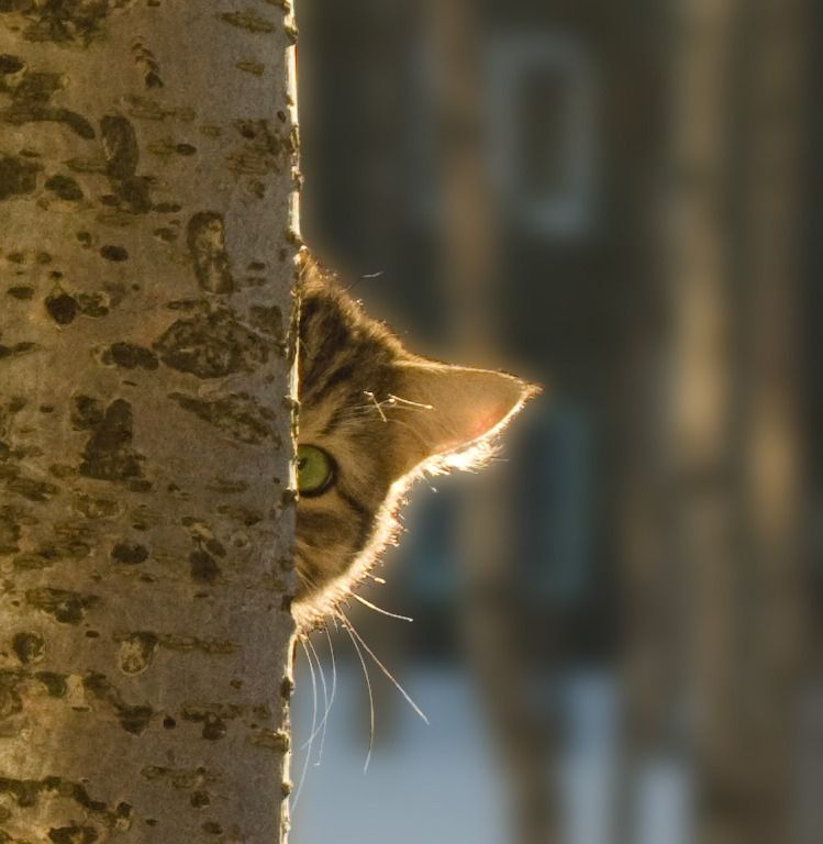 """""""Some animals are secretive, some are shy. A cat is private."""" --Leonard Michaels - by wega51"""