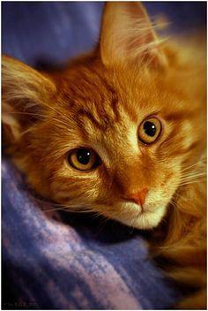 Cats Galore おしゃれまとめの人気アイデア Pinterest Chelsea Lynn