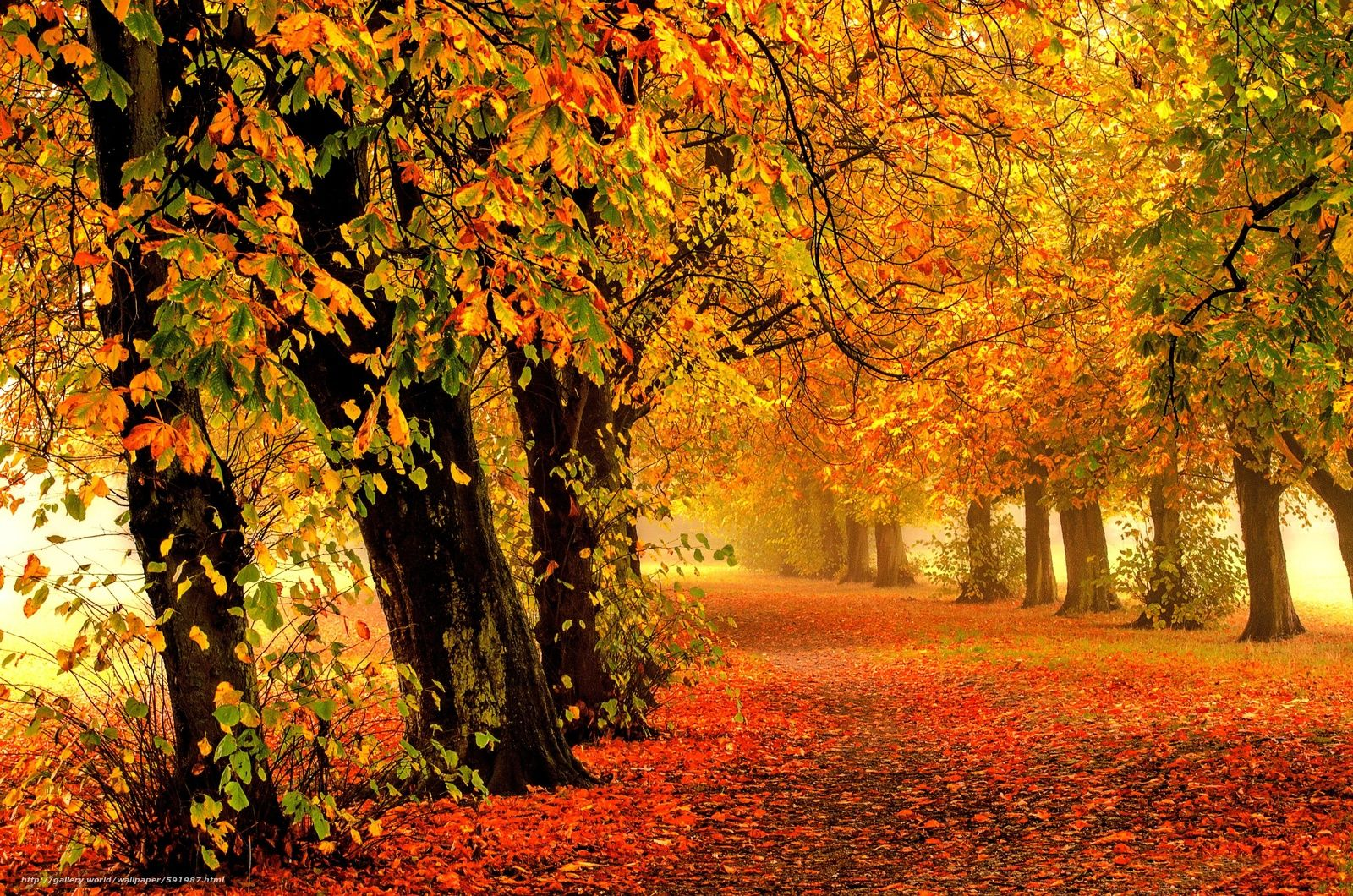 Pin On Automne