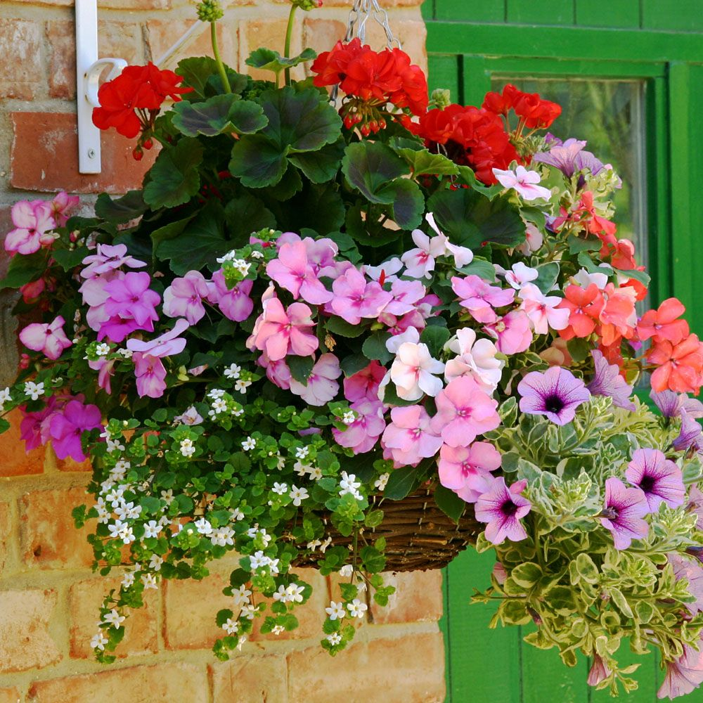 Hanging Flower Baskets Calgary : Hanging baskets of flowers close thank you bonza