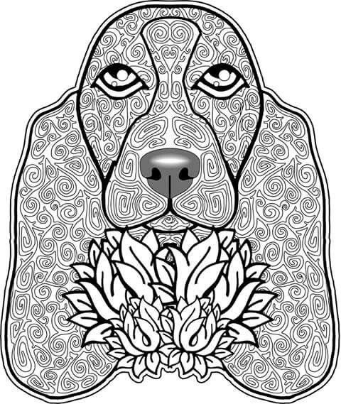 Basset Bassets all Bassets all lovely Dog coloring