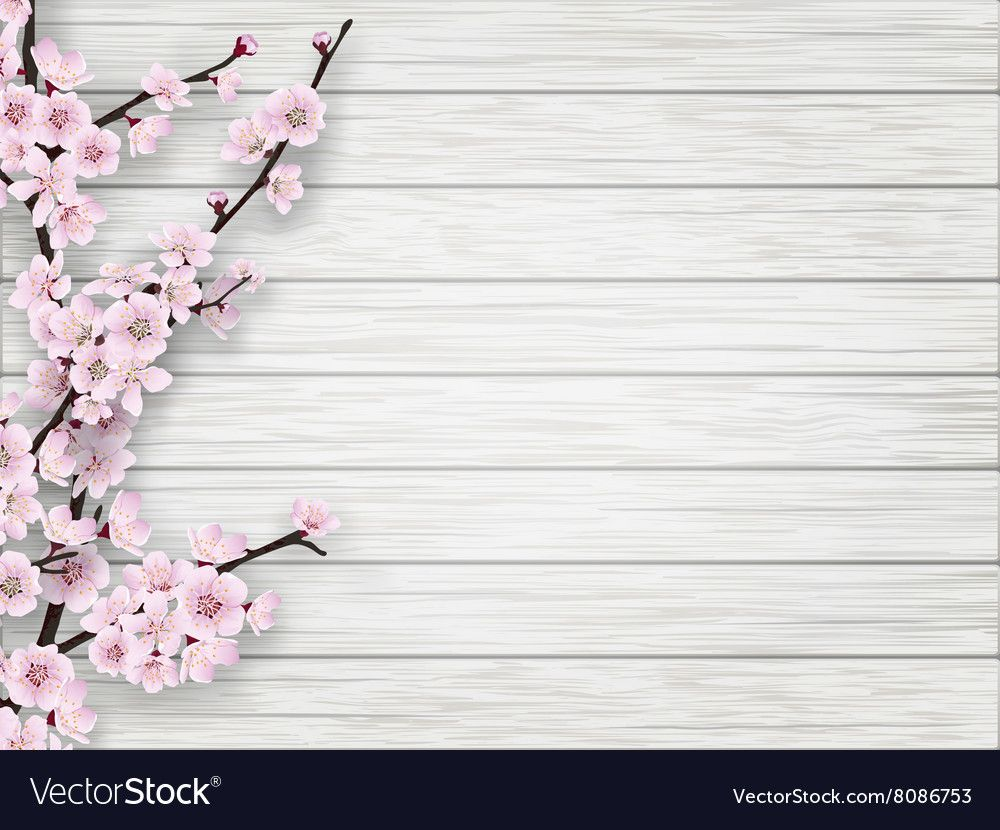 Pink cherry blossom branch on white old wood background