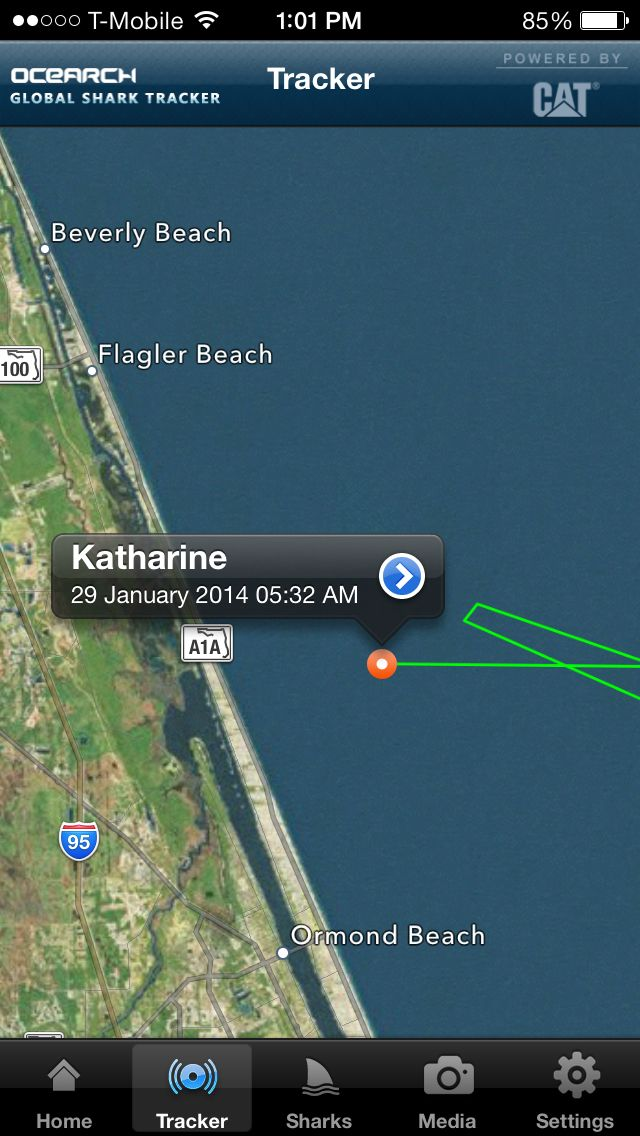 Katharine a 14ft+ female WhiteShark pinged in this