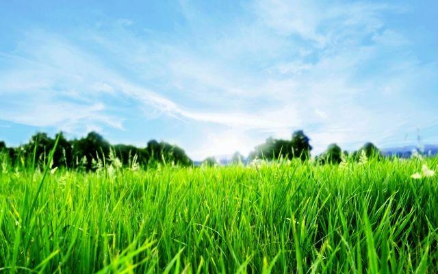 Hilfreiche Ideen und Tipps für Rasenpflege für samtiges Gras im