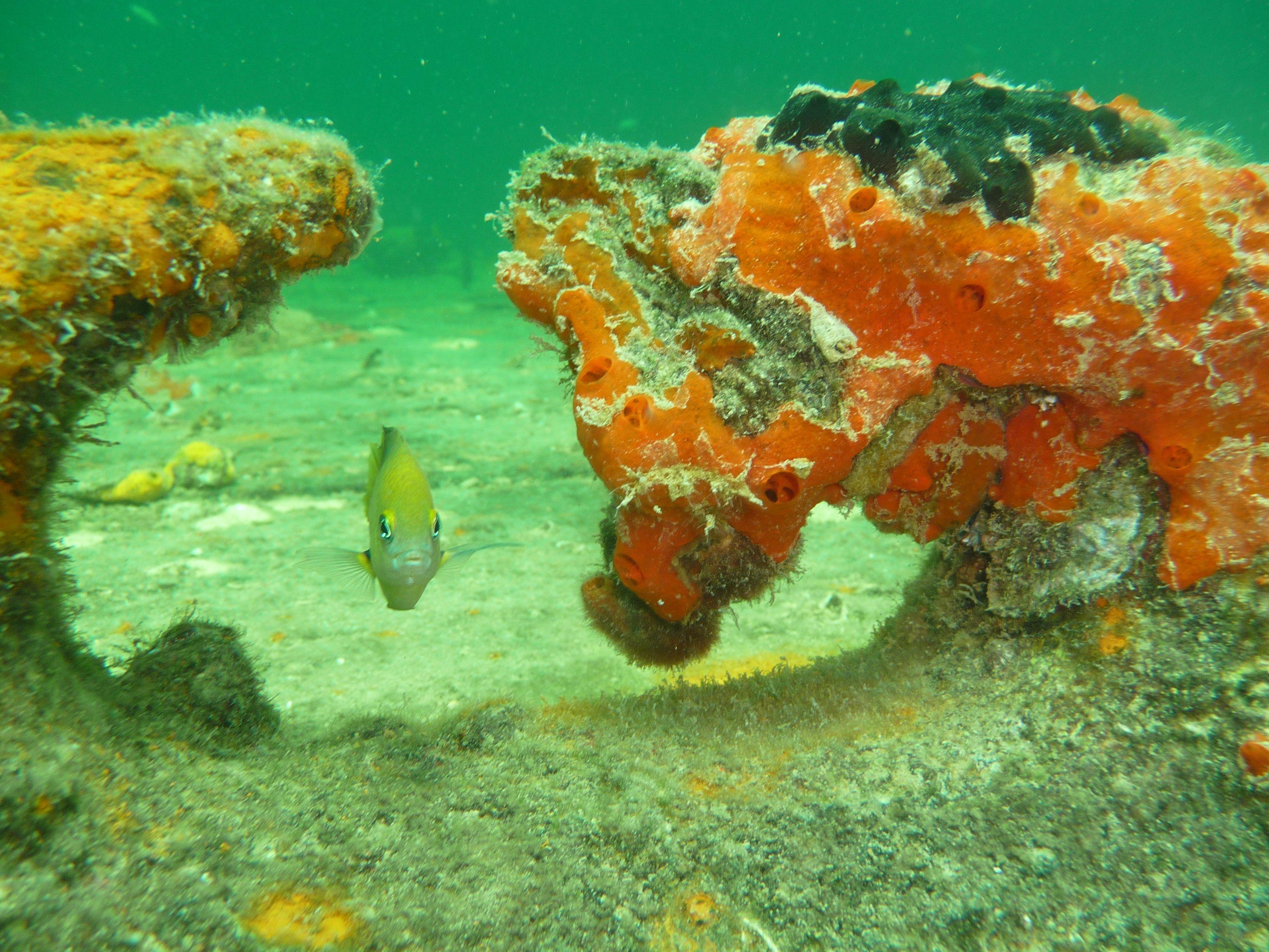 Diving at Bocas - Panama www.visitpanama.com