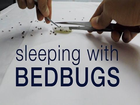 Top 10 Clever Riddles Youtube Bed Bugs Bed Bugs Treatment