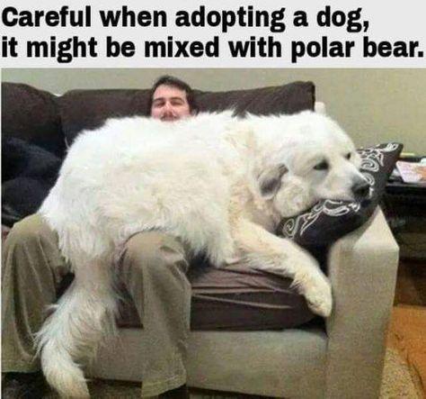 Careful Imagenes Divertidas De Animales Humor Divertido Sobre Animales Memes Divertidos Sobre Perros