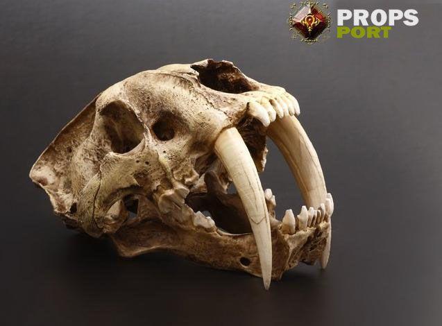 Saber-tooth Tiger Skull Model | beasts | Pinterest | Skull ...