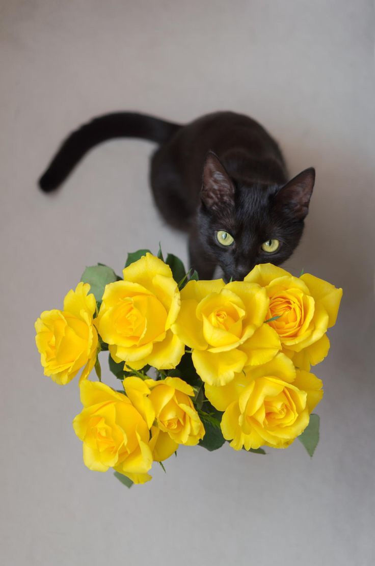 Color cats like - Sammy Gives Mama Some Special Yellow Texas Roses After Breaking The Tv Remote Running Around Like A Wild Monkey