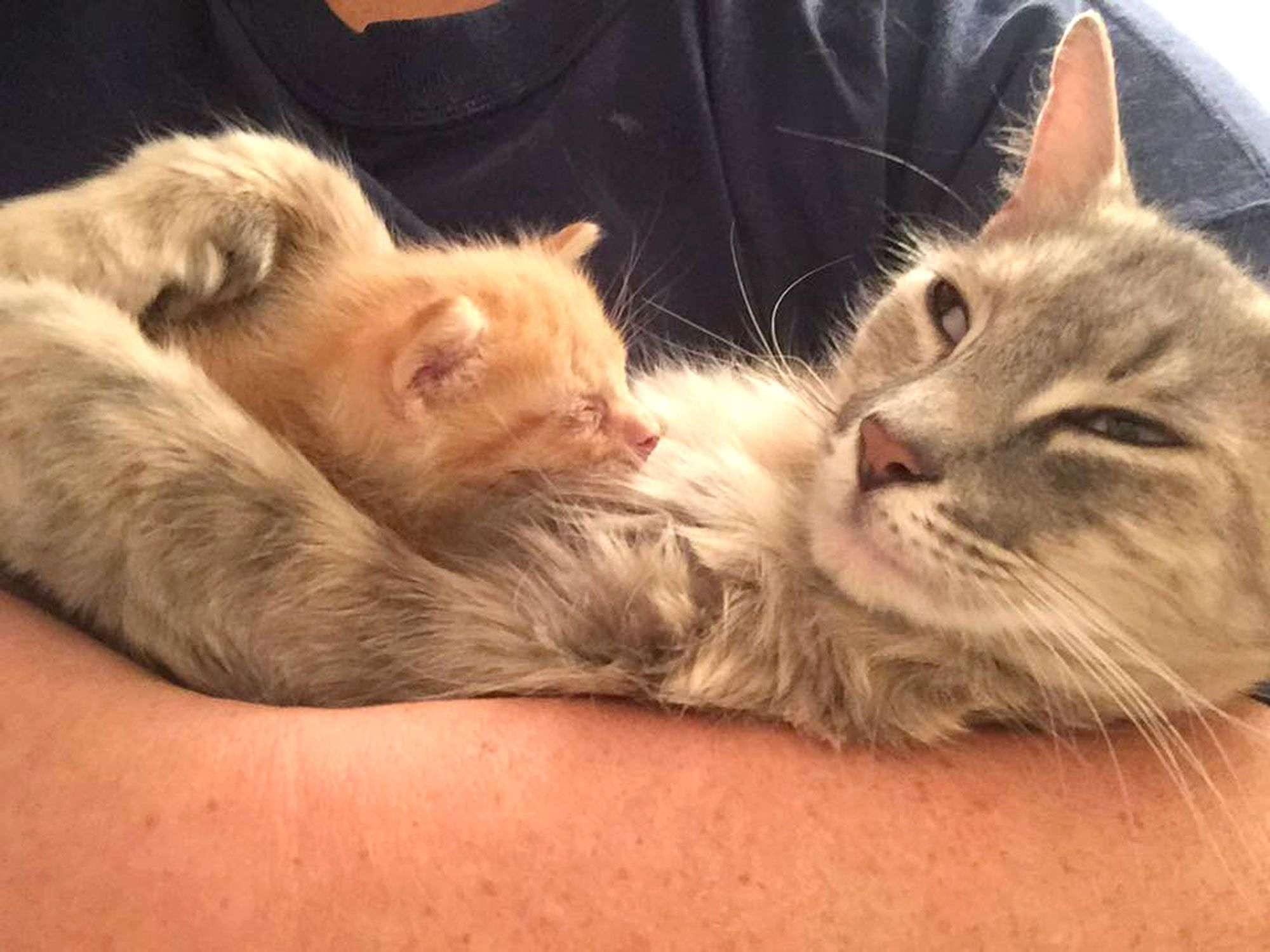 WATCH Grieving Mother Cat and Orphaned Ginger Kitten Be e