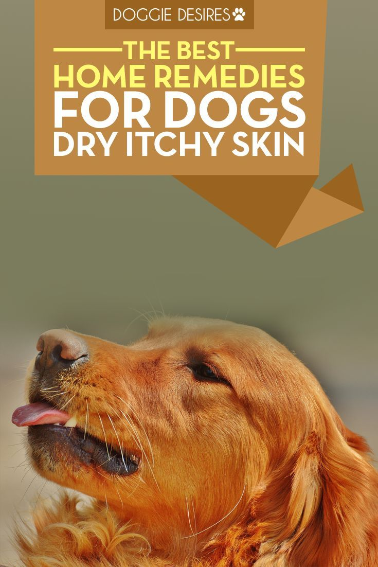 Home Remedies For Dogs Dry Itchy Skin Itchy Dog Dog Care Dogs