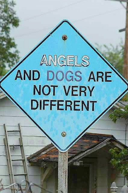 Angel Dog | Angels and Dogs by DustyReins, via Flickr