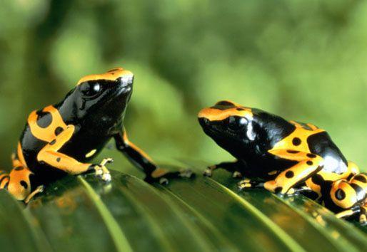 10 Amazing Amazon Facts Amazon Rainforest National Geographic