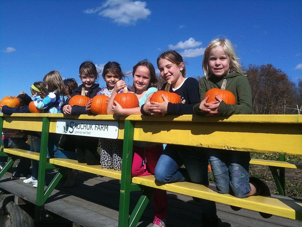 Road Trip Worthy Sauchuk's Corn Maze and Pumpkin Patch