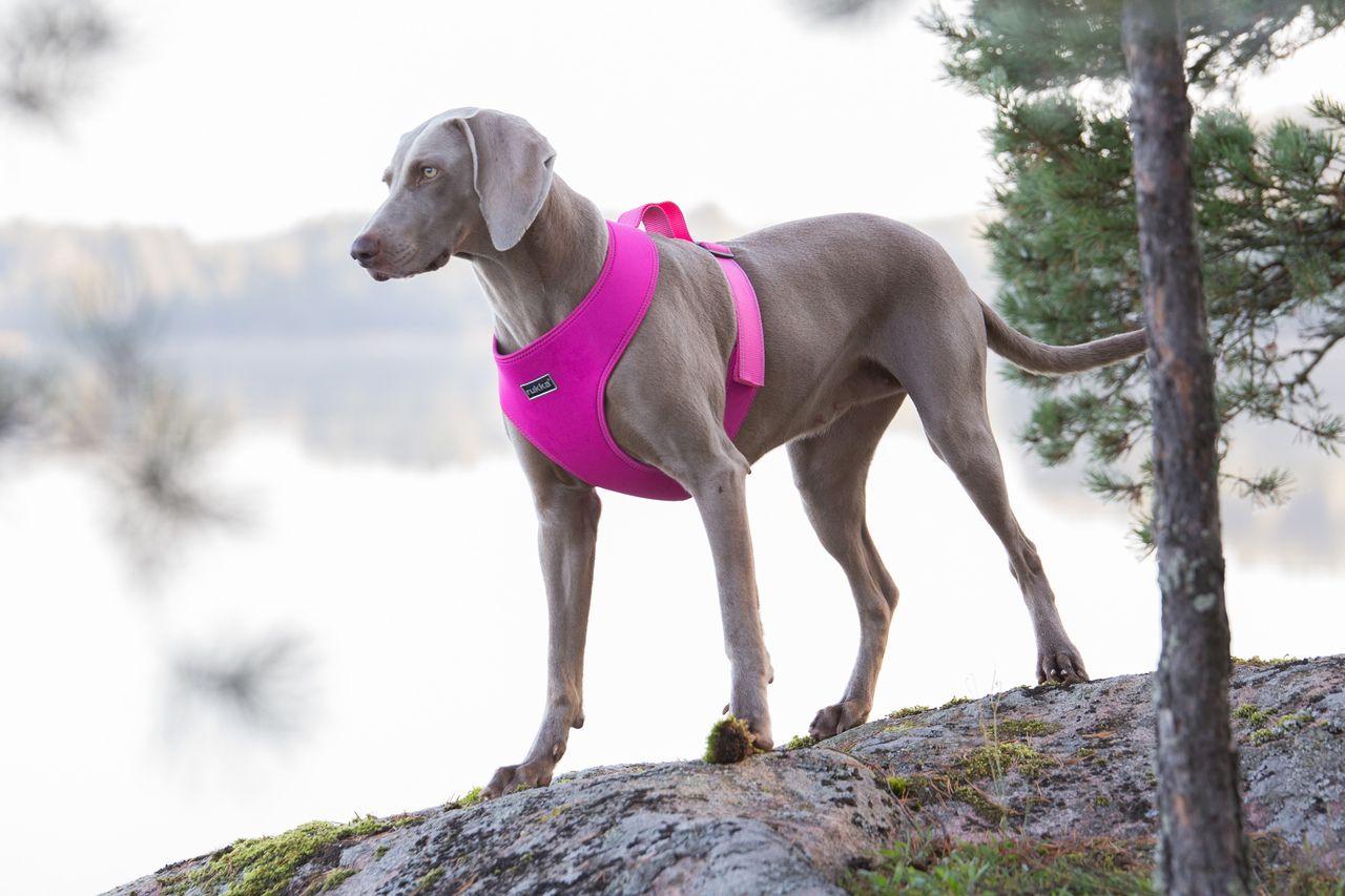 Rukka Big Comfort Valjaat Isommalle Koiralle Materiaali On Kevytta Ja Vettymatonta Neopreenia Rukka Big Comfort Harness For Bigger Dog Harness Pets Doggy
