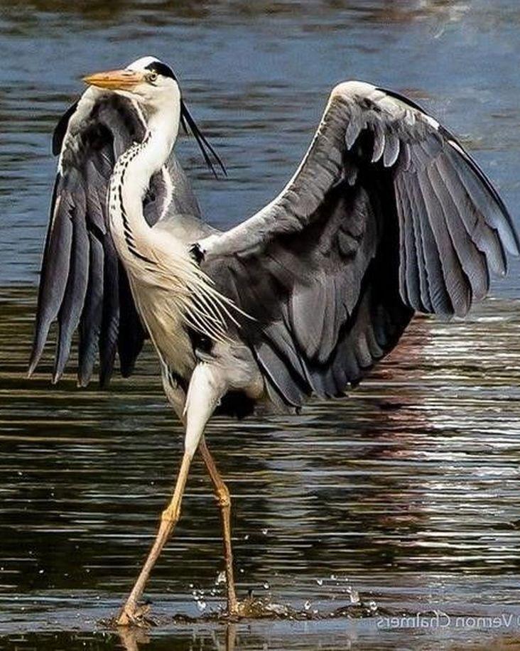 Крылья птиц девушка