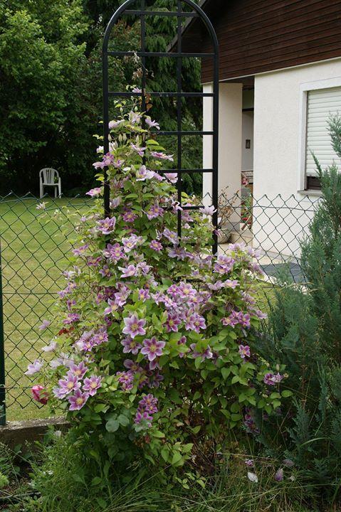 Das Rankgitter 'Burlington' von Classic Garden Elements mit einer üppig blühenden Clematis lässt den etwas biedere Draht-Zaun des Nachbars vergessen.