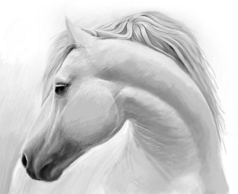 Disegni A Matita Primo Piano Muso Collo Cavallo Dettagli