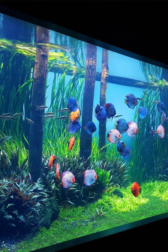 Planted Freshwater Aquarium Aquarium Architecture Tropical Fish Aquarium Freshwater Aquarium Plants Freshwater Aquarium