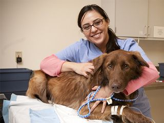people helping animals - Google Search | FINALLY THERES HOPE/THE ...