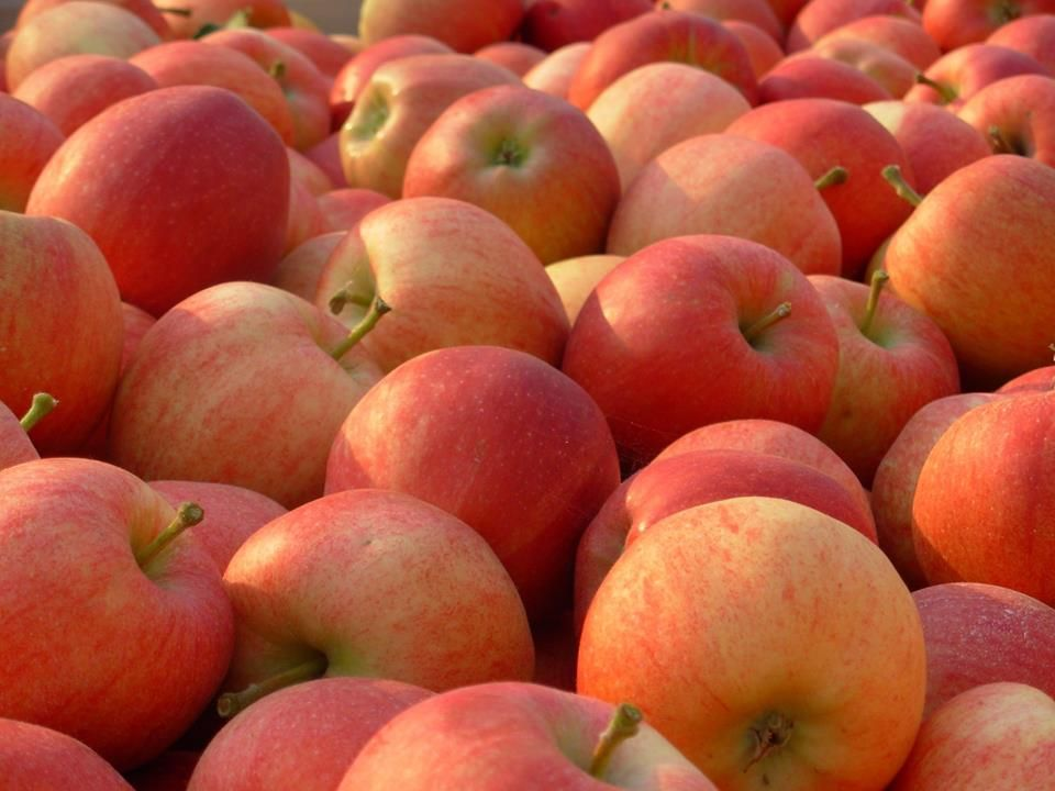 Mobili originali ~ Choose the original mobile juice factory to juice your fruit this