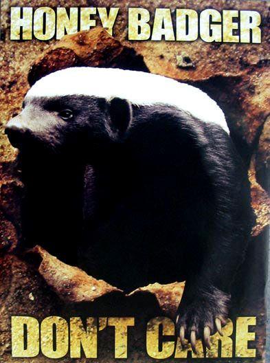 honey badger meme.html