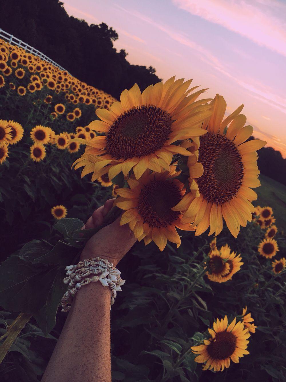 Bouquet Of Sunshine Flower Aesthetic Sunflower Pictures Sunflower Flower