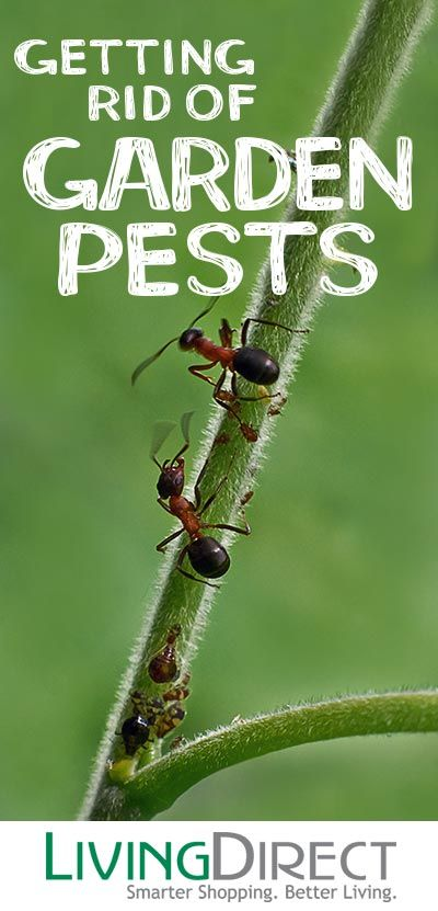 Indoor Garden Pests 8 tips for getting rid of common garden pests gardening 8 tips for getting rid of common garden pests workwithnaturefo