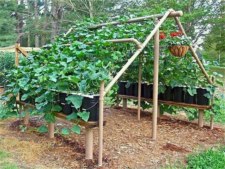 recycling in garden, green gardening, recycling ideas | Organic ...