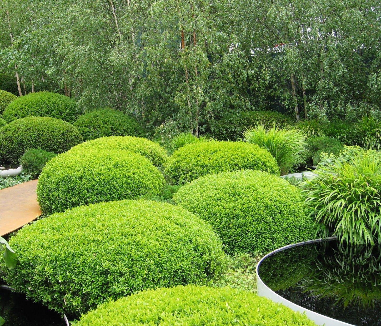 Japanese Evergreen Google Search Japanese Garden 400 x 300