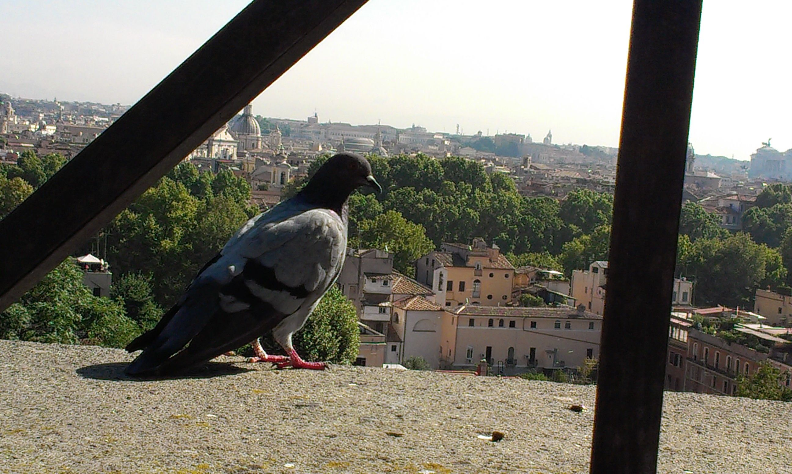 Dove in Rome, Made by Bauke Beert Keizer