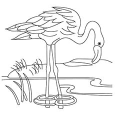 Top 10 Flamingo Coloring Pages For Toddlers Flamingo Coloring