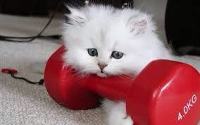 Kalisod wala-on sa pooch :(  #fitness #exercise #workout