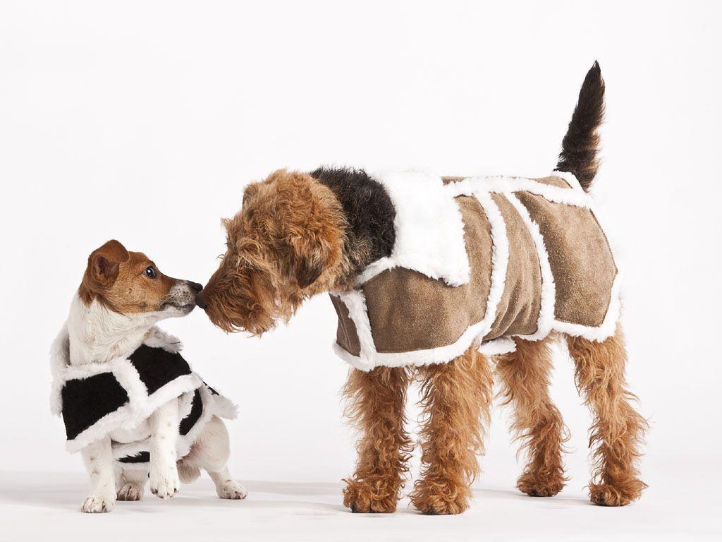 Dog Carrier: Pet Travel Bag: Original Deluxe Sherpa Bag at Drs ...