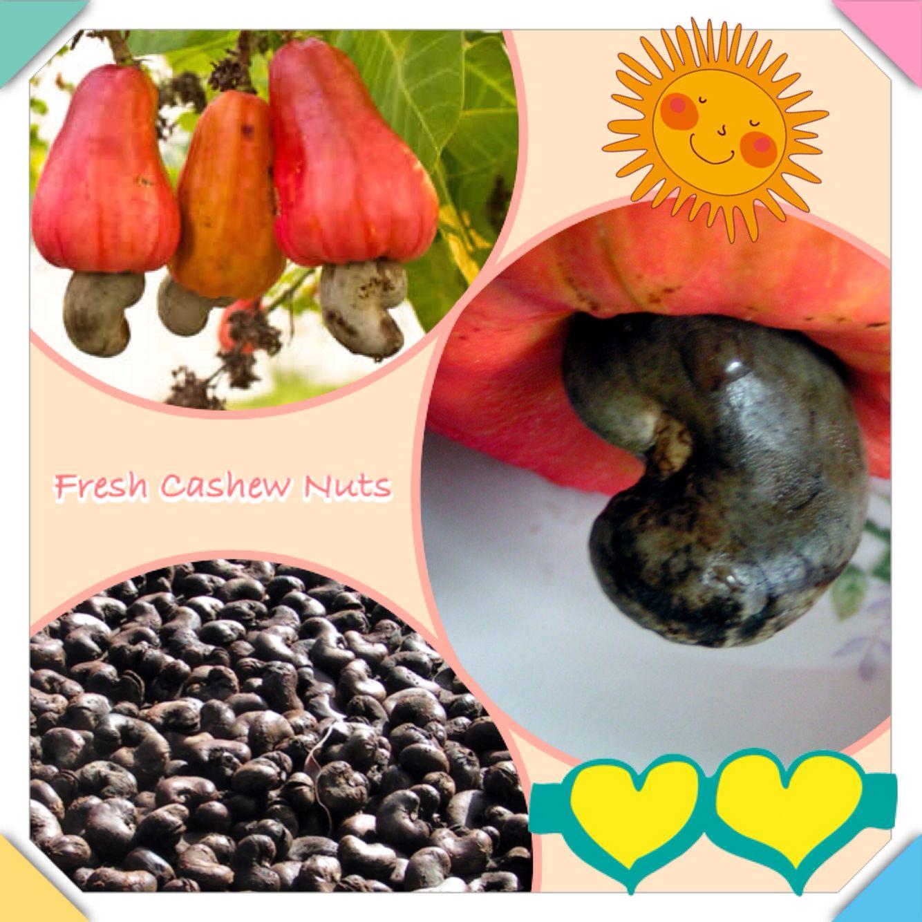 Cashew Nuts Grenadinen