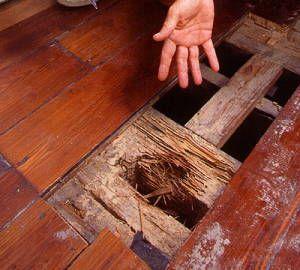 Termite Wooden Floor Damage Wood Floors Termite Damage