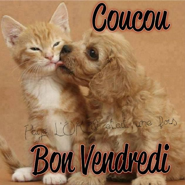 coucou bon vendredi vendredi chat chaton chien chiot bisou drole mignon marrant vendredi. Black Bedroom Furniture Sets. Home Design Ideas