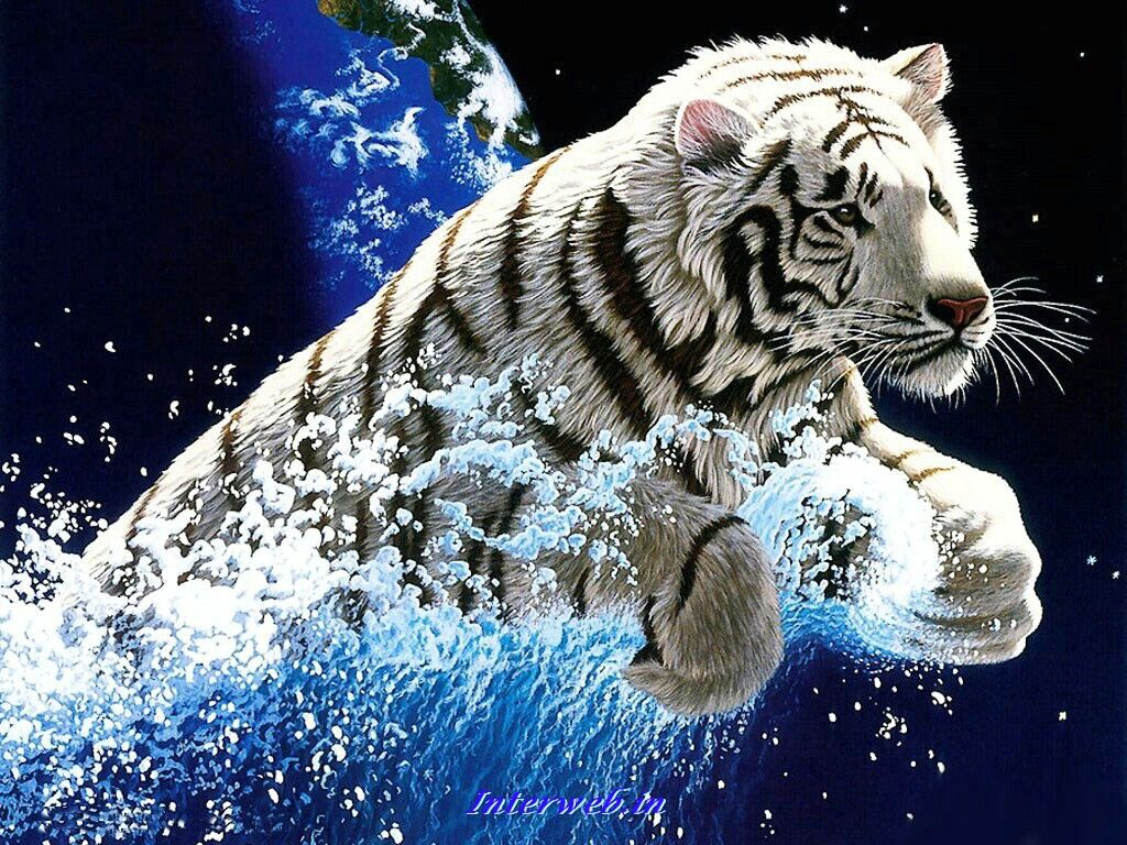 Category 3d Page 48 Tiger Wallpaper Tiger Pictures Animal Wallpaper