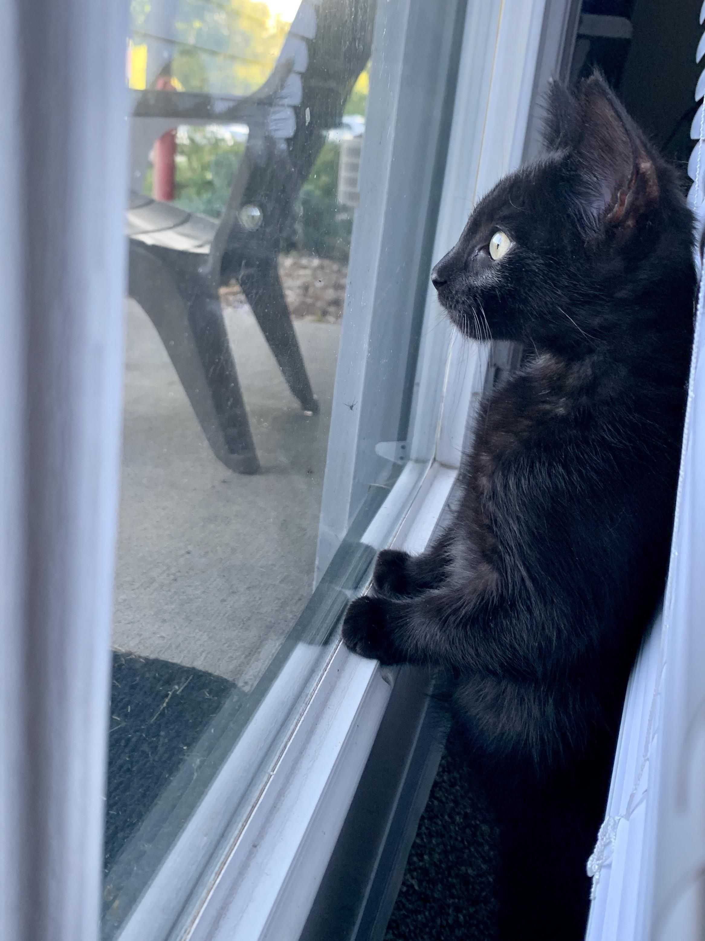 Archer Loves Looking Out Windows Cat Watch Crazy Cats Pretty Cats