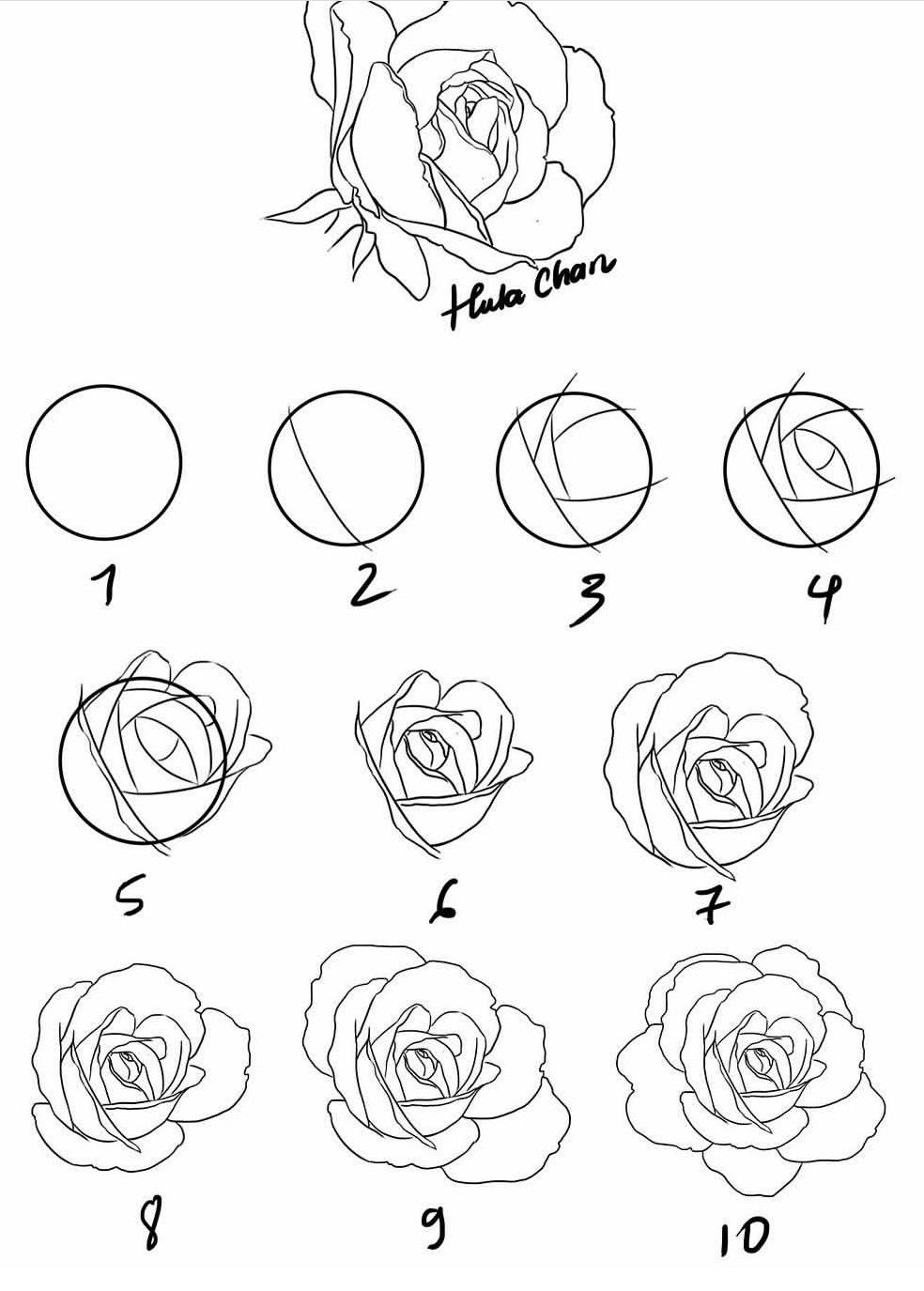 Pictures Of Roses To Draw : pictures, roses, Roses, Drawing,, Flower, Drawing