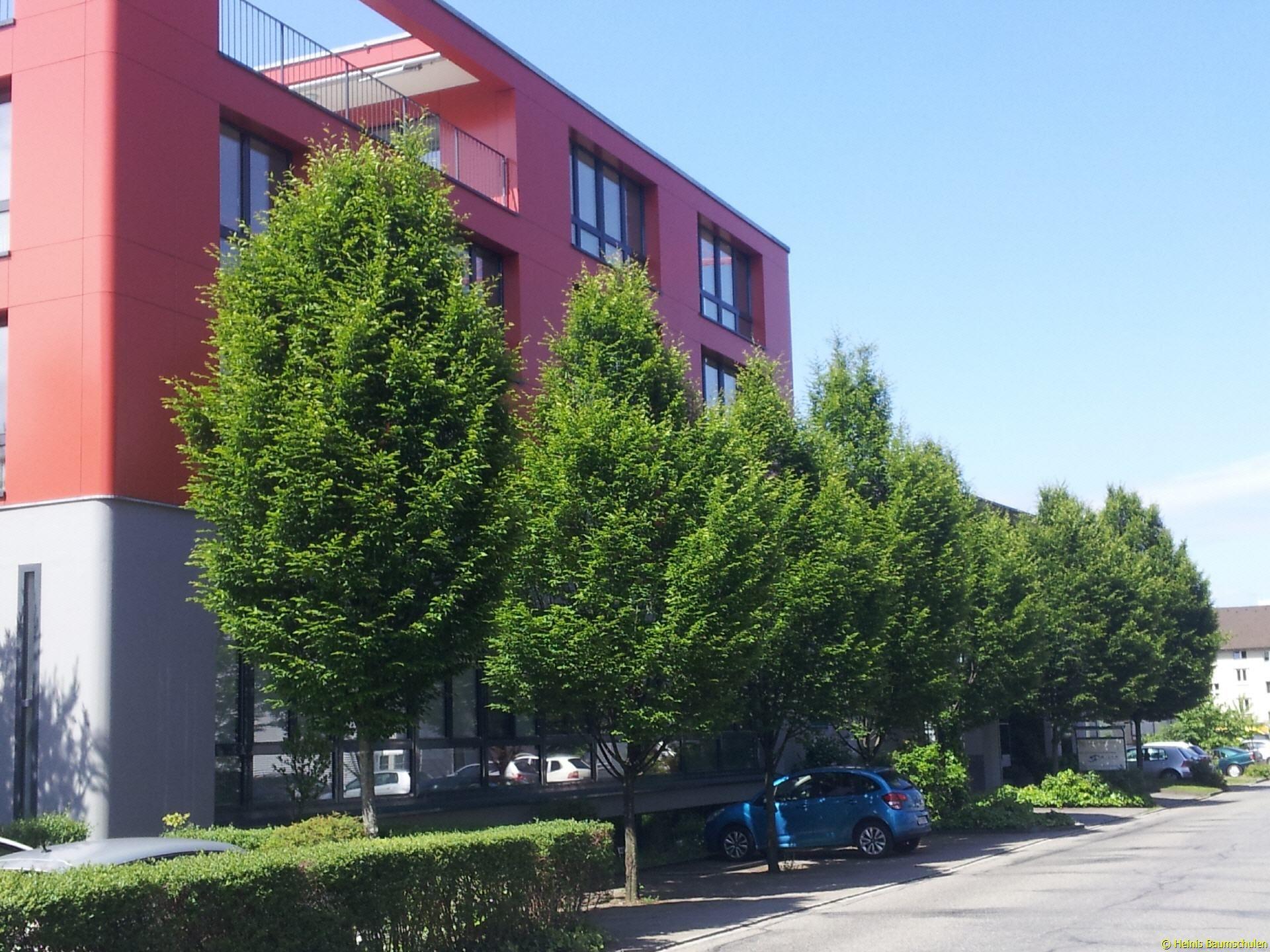 Schweizer Versand Baumschule Garten