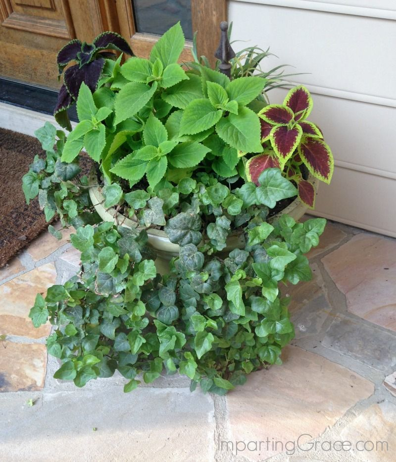 House Plants For Shady Rooms: Best Plants For A Shady Porch