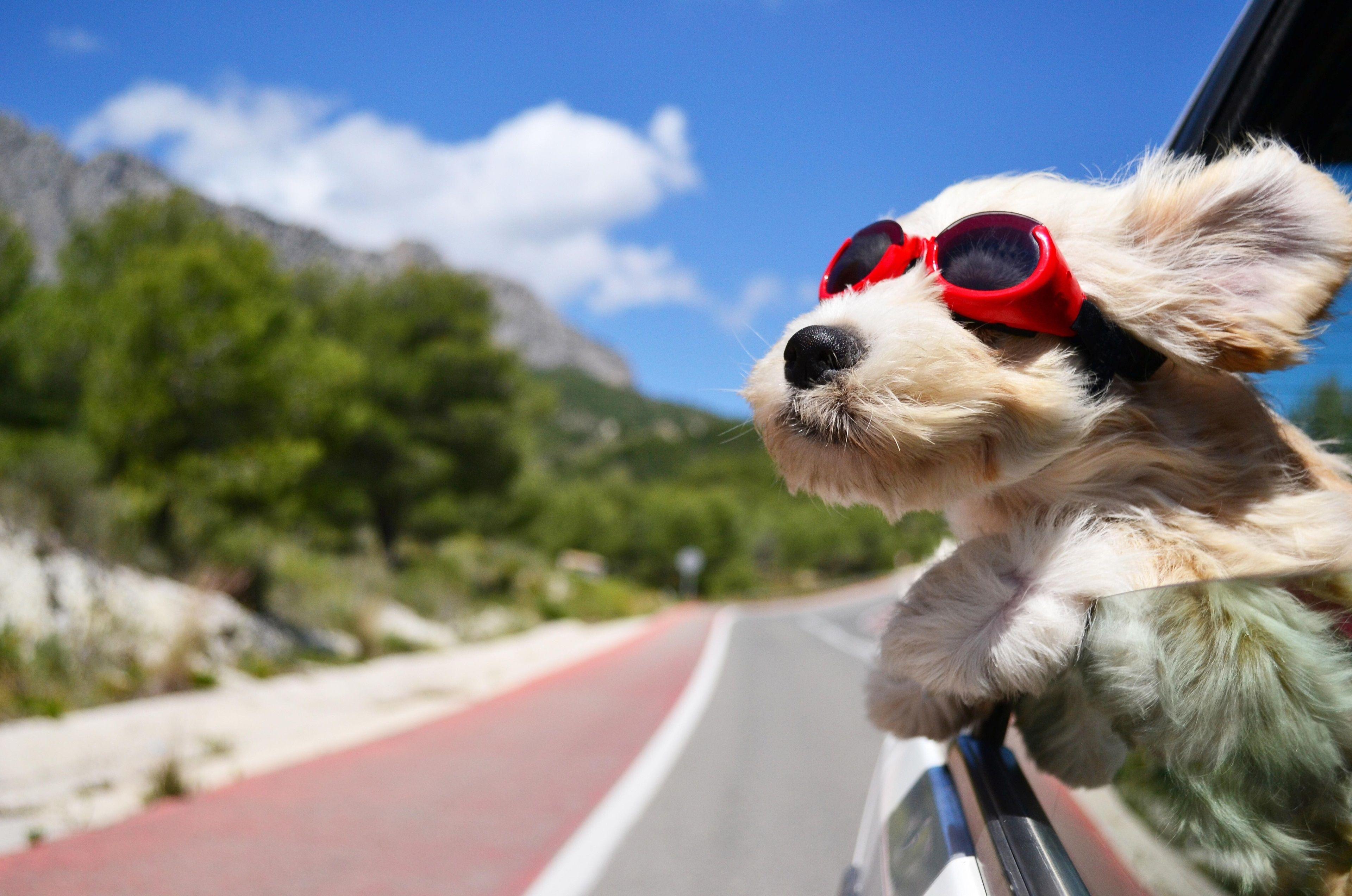 3840x2544 Dog 4k Desktop Wallpaper Free Download Gekke Honden Honden Dieren