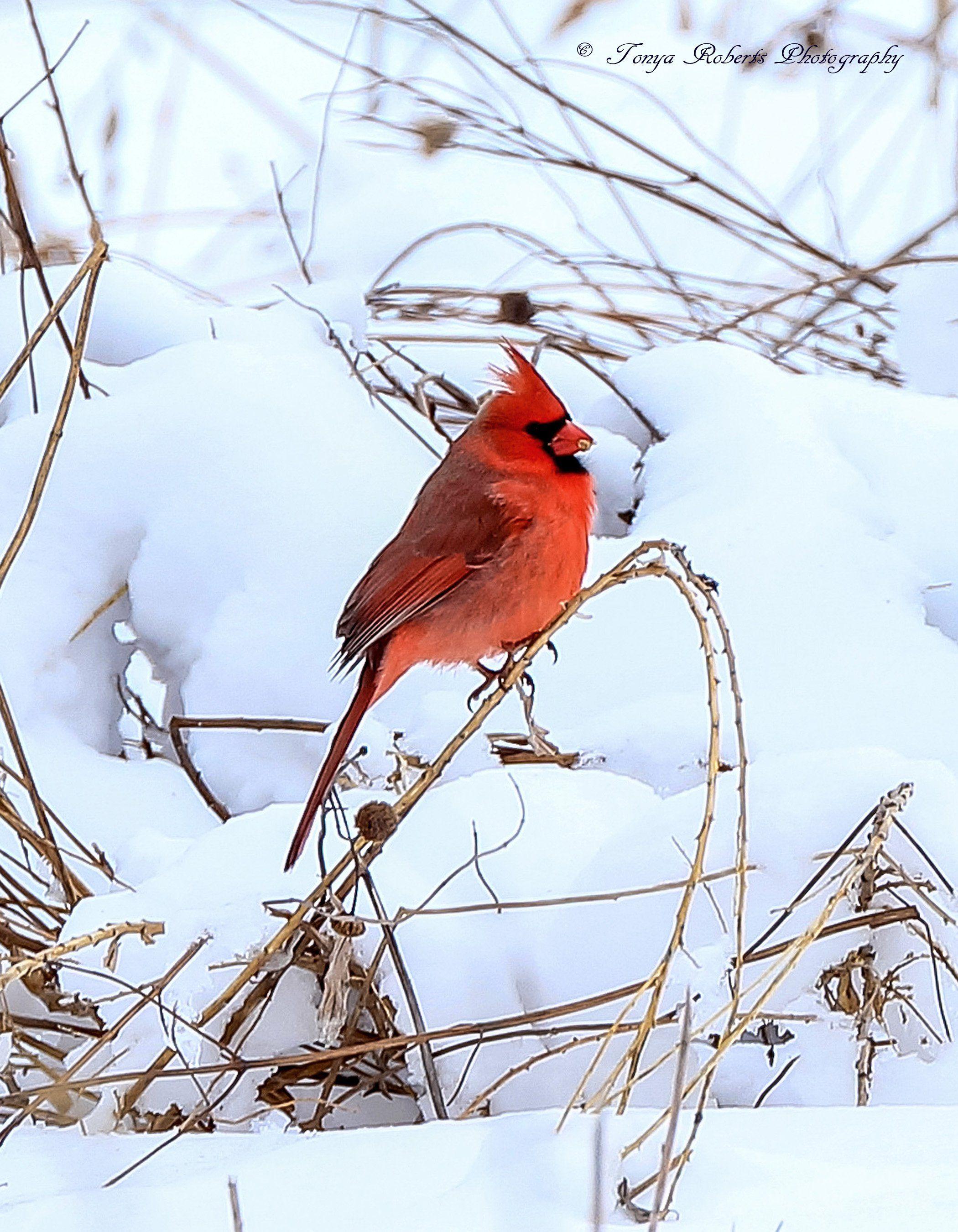 Wildlife photography via Photography Talk.