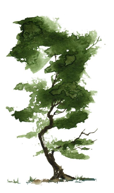 Little Watercolor Tree Arbres En Aquarelle Dessin Arbre Et Art