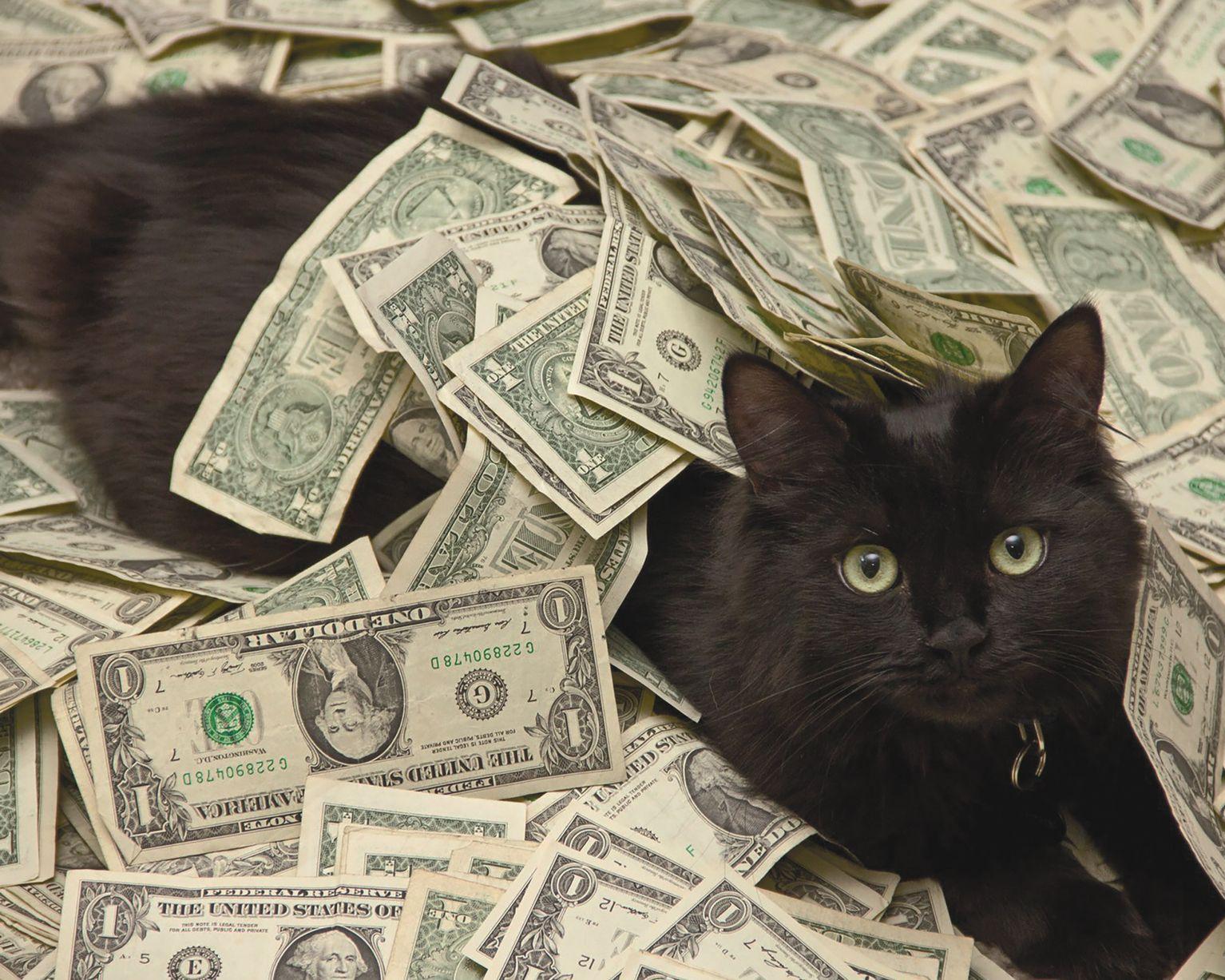 Приметы о черных котах и кошках