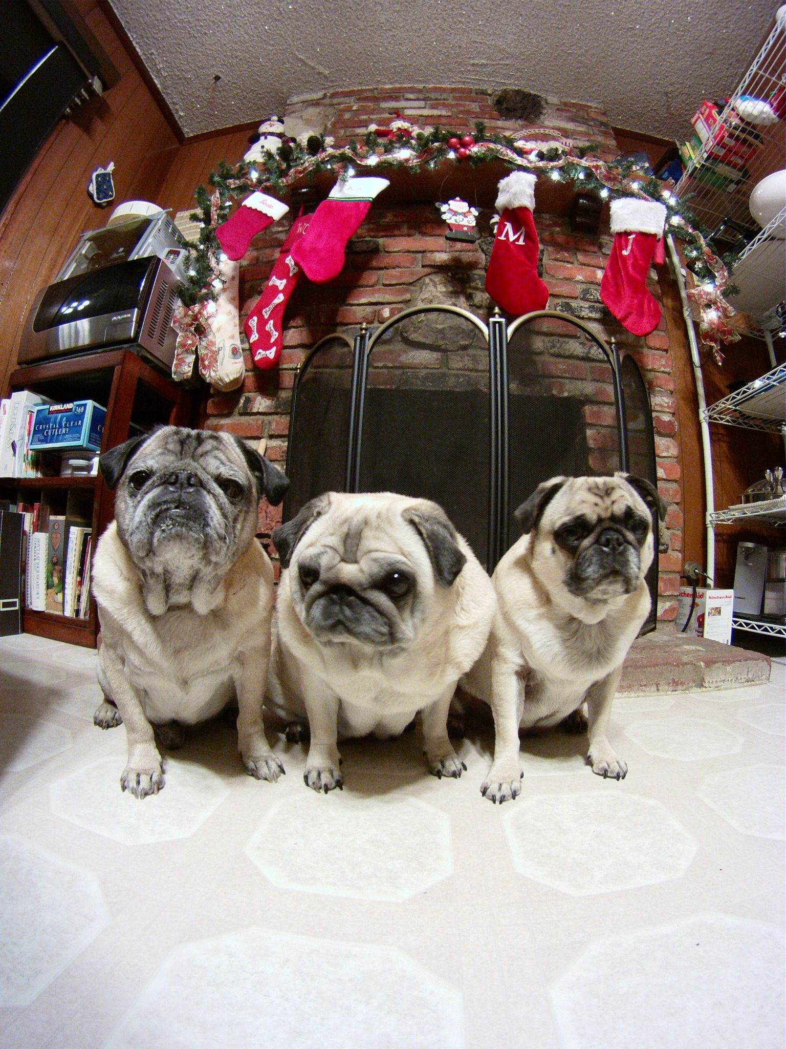 Posing by the fire Pugs funny, Pug love, Pugs