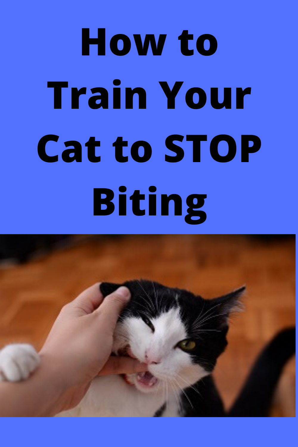 How To Train Your Cat To Stop Biting In 2020 Cat Training Cat Biting How To Train Your