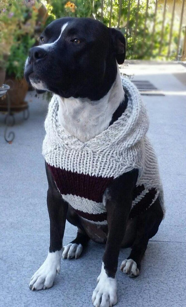 d9d02277cb66 A specialized pattern for dogs with a big BEAUTIFUL chest!I designed this  pattern for my Staffordshire Terrier, who becomes horribly chilled in our  Winter ...