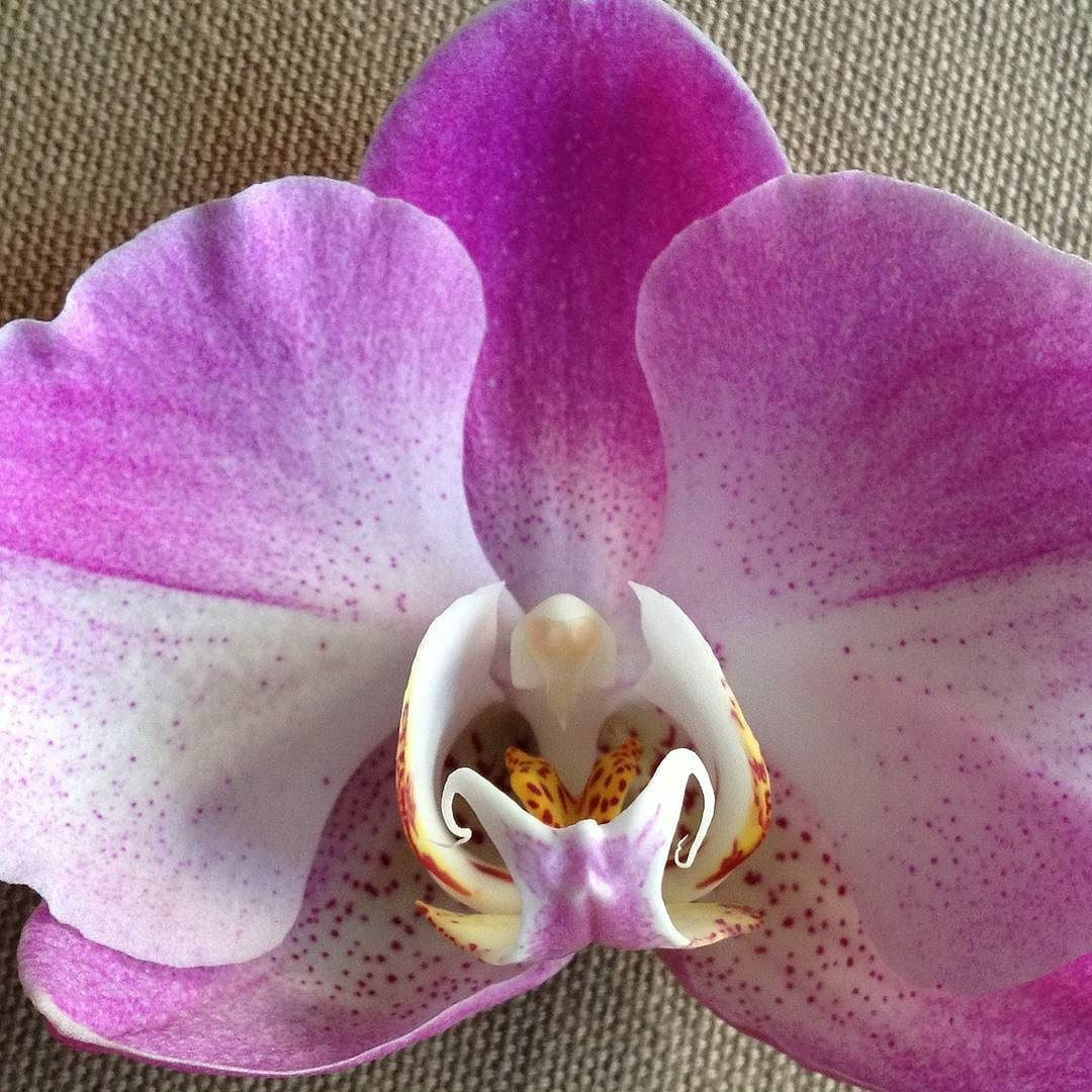 Orchid Reference photo for Acrylic Painting Tutorial this Saturday. #angelafineart #Youtube